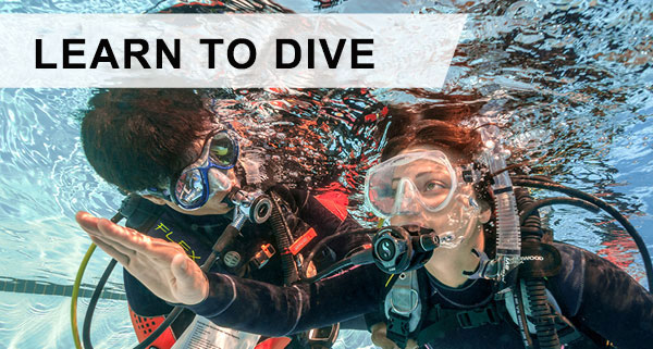 Web-learn-to-dive